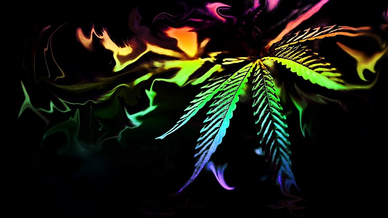 Cannabis: tre cose da sapere