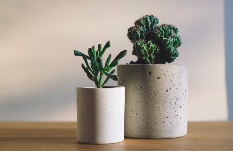 Benefici delle piante grasse: 4 motivi per tenerle in casa